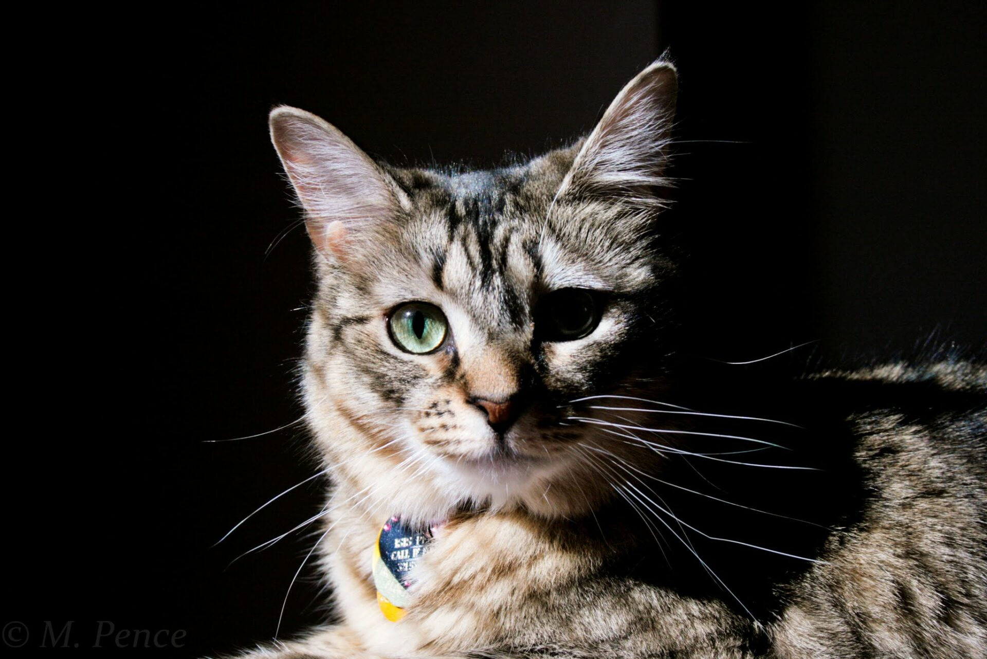 Photo of a cat in the sun near blinds, staring into the camera.
